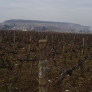 Chorey towards the hill of Corton