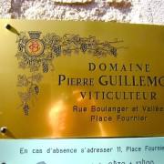 guillemot