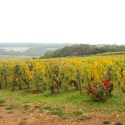 le montrachet towards chassagne
